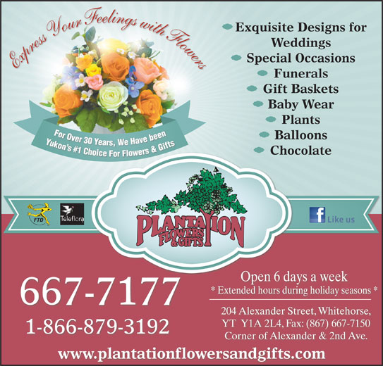 Plantation Flowers & Gifts (867-667-7177) - Display Ad - Exquisite Designs for Weddings Special Occasions Express Your Feelings with Flowers Funerals Gift Baskets Baby Wear Plants For Over 30 Years, We Have been Yukon s #1 Choice For Flowers & Gifts For Ovbeen For Over30 Ye Y Balloons Yars,We Havebeen Yukon n s s# Gifts #1 1 C &G Ch s& rs hoi Chocolate er ice For Fl lowe Open 6 days a week * Extended hours during holiday seasons * 667-7177 204 Alexander Street, Whitehorse, YT  Y1A 2L4, Fax: (867) 667-7150 1-866-879-3192 Corner of Alexander & 2nd Ave. www.plantationflowersandgifts.com